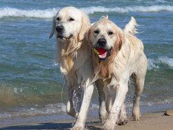 chien_vacances_6