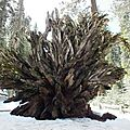 Séquoiam Yosemite Park