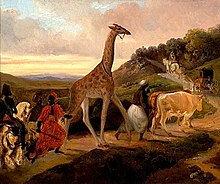 Girafe de Jacques-Raymond Brascassat 1827