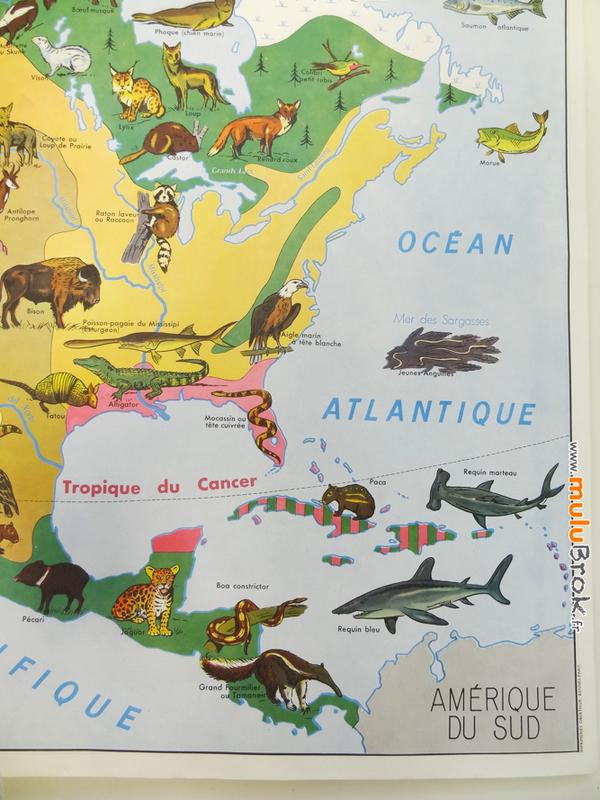 CARTE-Amérique-Nord-végétation-faune-4-muluBrok-Vintage