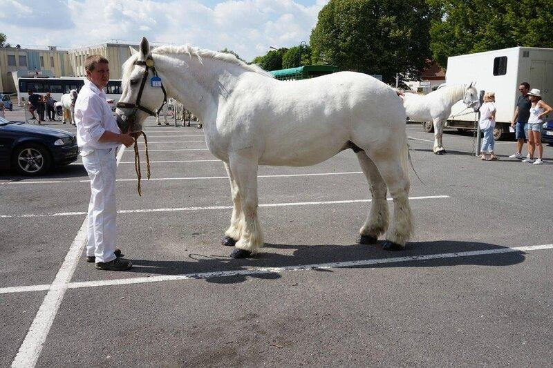 Nayade de Tachincourt - 17 Juin 2017 - Concours élevage local - St Pol sur Ternoise (62) - 2e (Non Suitées)