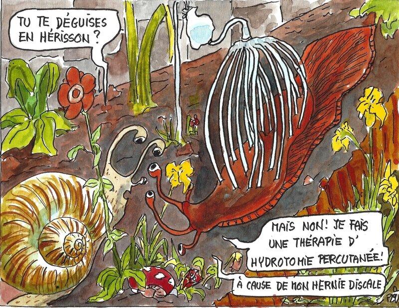 Hydrotomie percutanée sur limace
