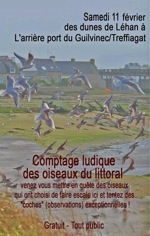 comptage-oiseaux