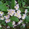 mes fleurs de jardin