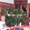 58_diner restaurant Té Manava