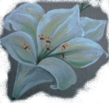 lys fleur1