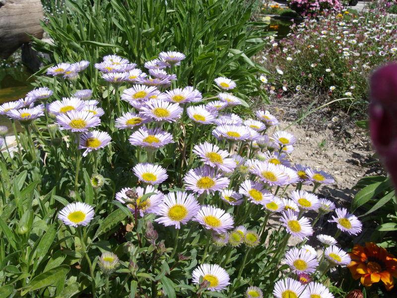 parterre de fleurs 1