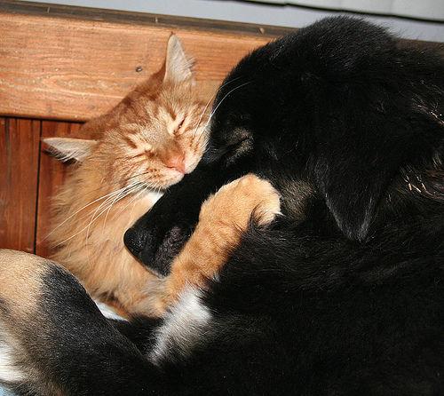 chien et chat hug noir
