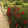 Windows-Live-Writer/jardin_D005/DSCF3880_thumb
