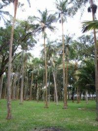 7 palmier_ [320x200]