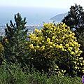 mimosas fevier_11