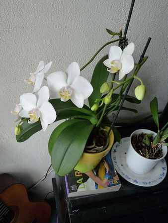 Orchidee_31_12_10__3_