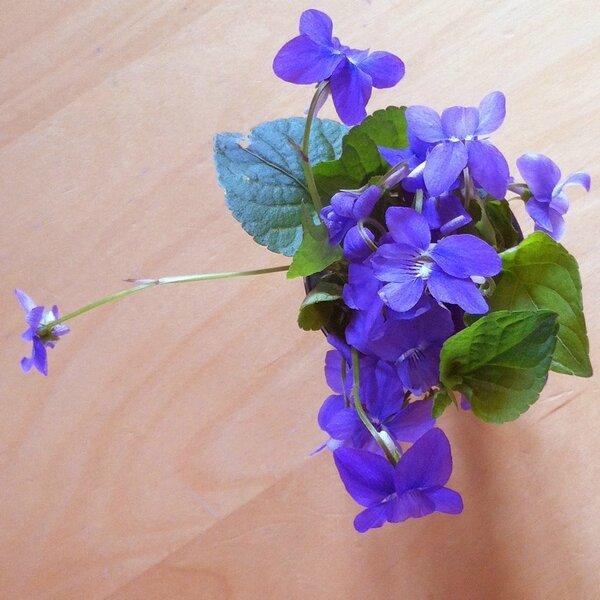 fleurs avril 12