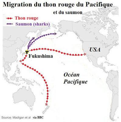 Thon rouge Pacifique migration fukushima californie