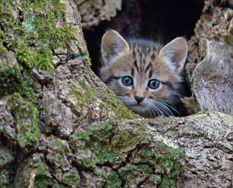 Puits Enfer chat matin 130816 64 trou arbre regard