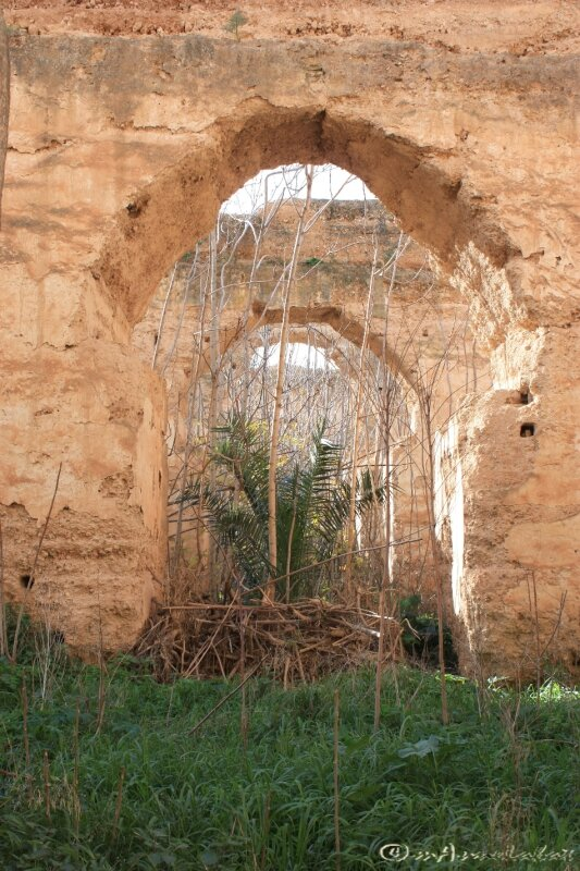 ©23_broussaille Hri Moulay Ismaïl