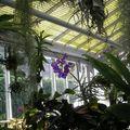 Cours de botanique - 3