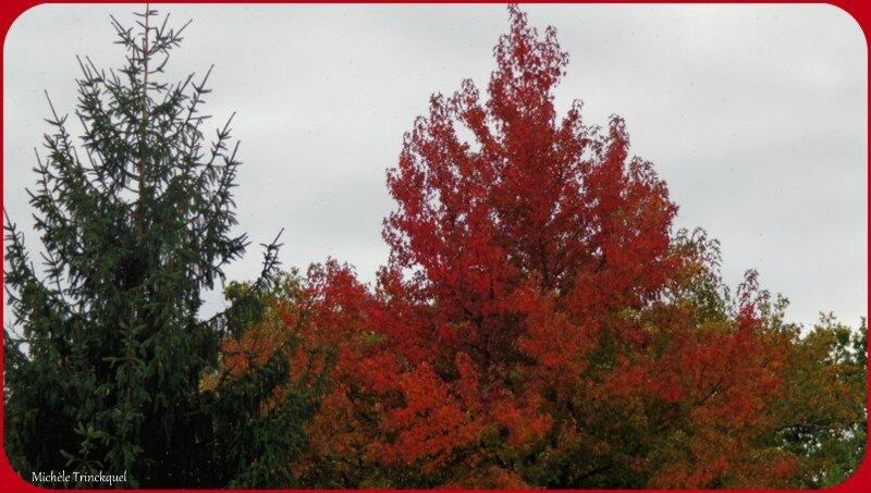 Feuillages automne 061015