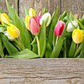 C'est le printemps, c'est le bonheur