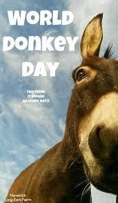 Celebrating World Donkey Day! #Maverick #LongEarsFarm | Donkey ...