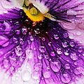 Gouttes sur fleur