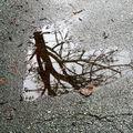 Coeur flaque reflet_5813 a