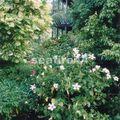 canouan_tamarind beach_jardin_012