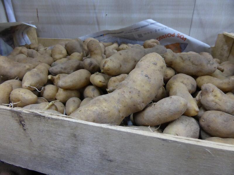 23-pommes de terre (12)