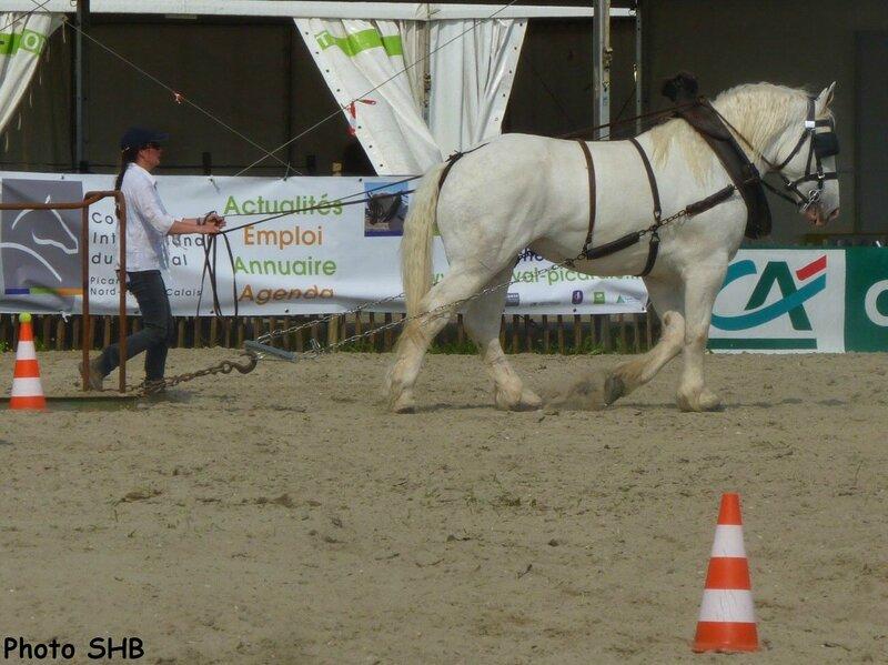 Brume de Tachincourt - Concours d'Utilisation - Tilloy les Mofflaines (62) - 13 juin 2014 - photo SHB