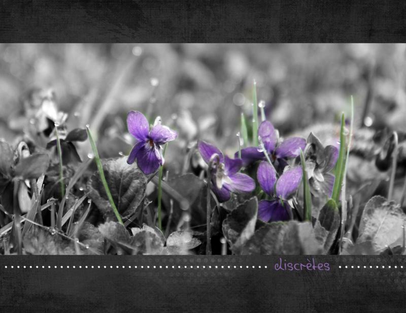 Violettesscraplift 4-sept--