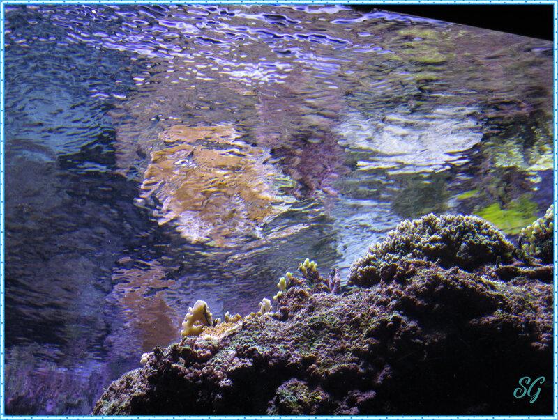 Océanopolis (38)