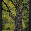 un arbre, pastels secs, 30 x 40 cm