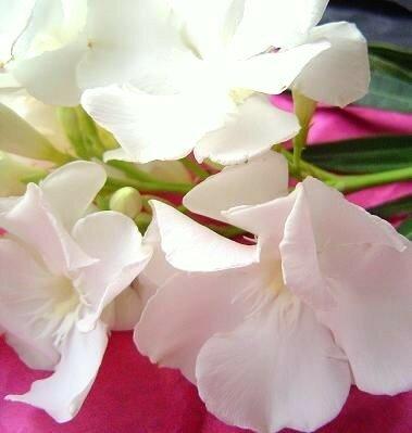 fleur_juillet_2007__300