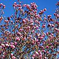 Magnolia 0602167