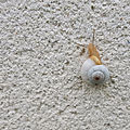 L'escargot