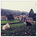 Explore yorkshire - automne 2013