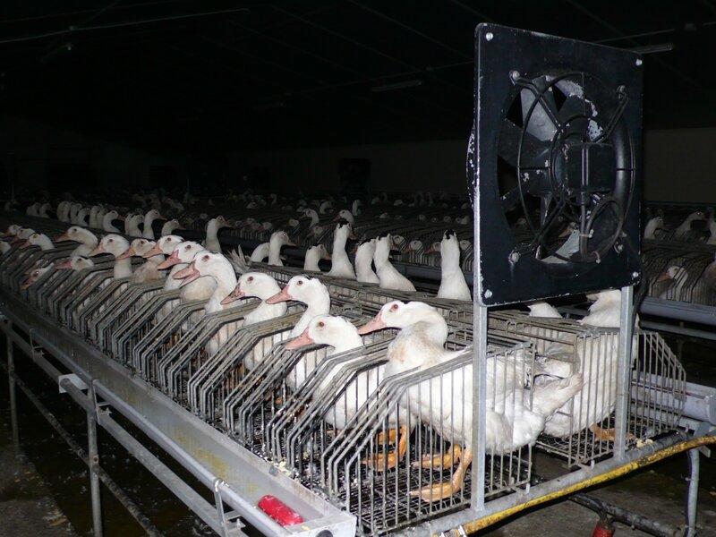 canards-foie-gras-2008-fr-C-018