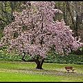 Image du jour - patience, le printemps arrive...