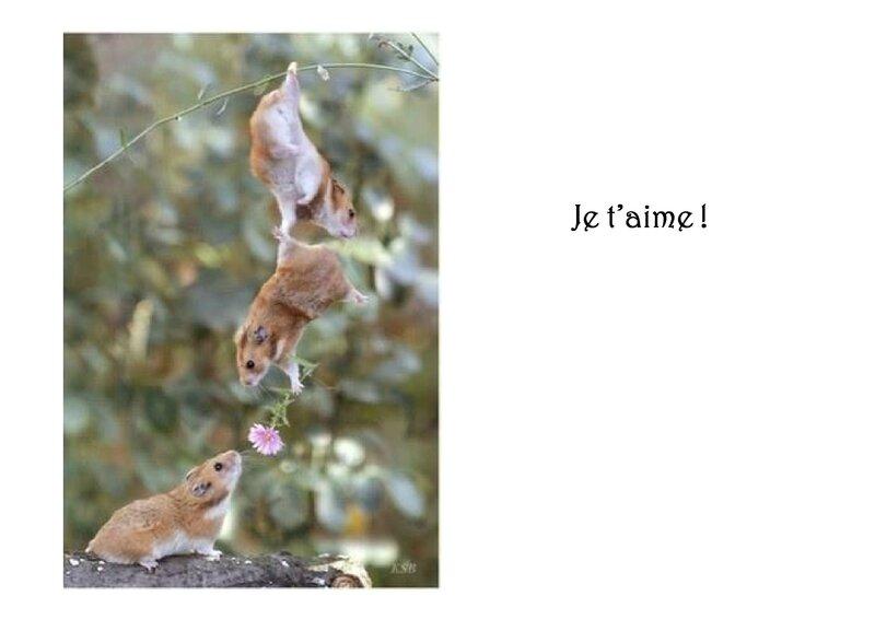 07-La-complicite-homme-animaux-3 [Mode de compatibilité](9)