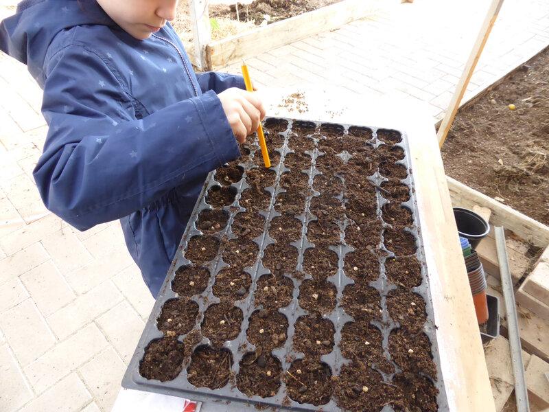 27-betteraves, semis betteraves (1)
