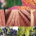 Défi'13#8 couleurs fanées