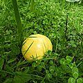 citrouille 13