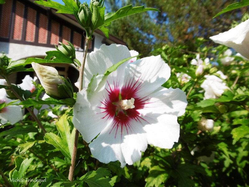 1-Fleurs de Léon 140718