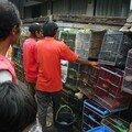Le marché aux oiseaux de Yogja