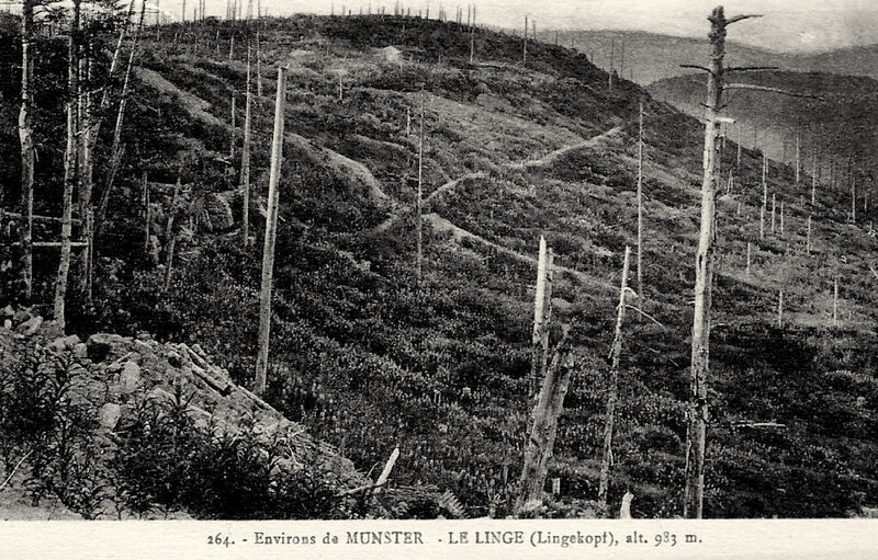 le Linge, bois dévastés