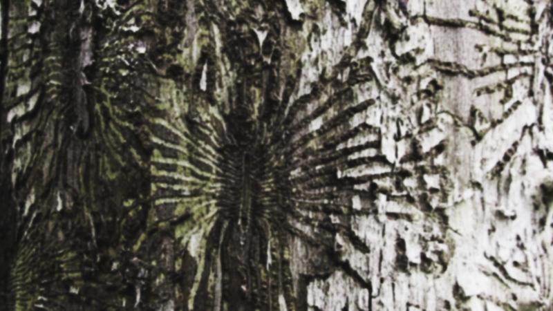 vlcsnap-2015-02-25-16h40m57s223