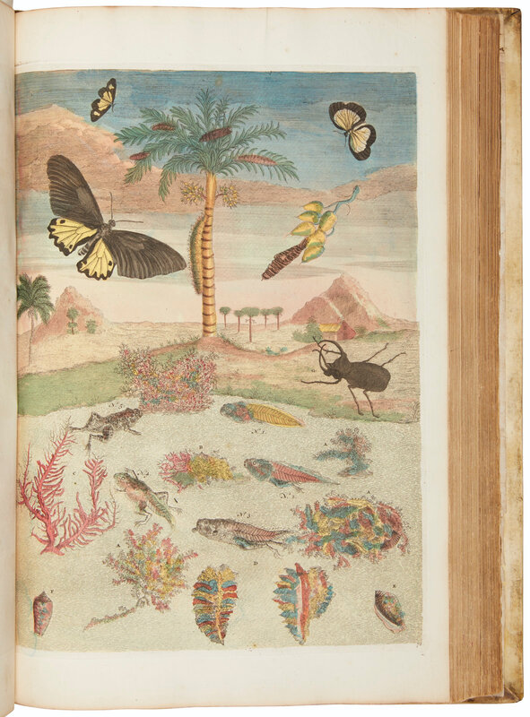 2019_NYR_17666_0115_006(maria_sibylla_merians_great_plate_books_on_insects_amsterdam_1719_1730)