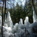 La foret de glace