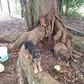 Ramsès 1 attachée à un tronc, ses pattes ne touchaient pas terre et son bb libre heureusement