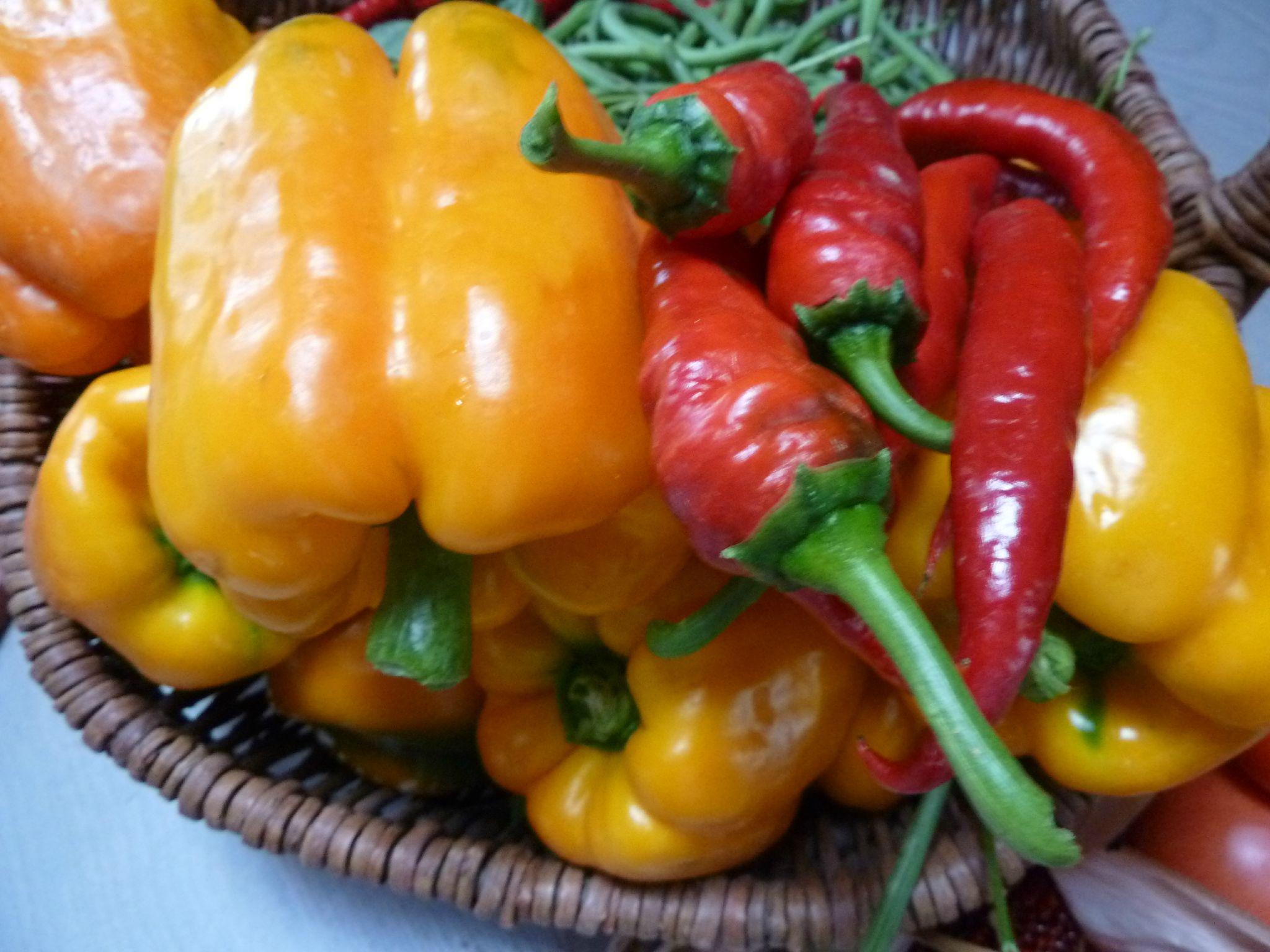 poivrons, piments - - www.passionpotager.canalblog.com